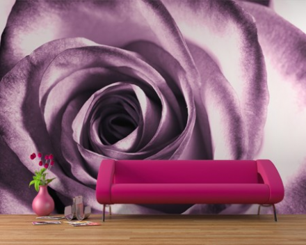 Purple rose flower wallpaper wall mural